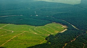 Palm Oil- Sustainability.jpg